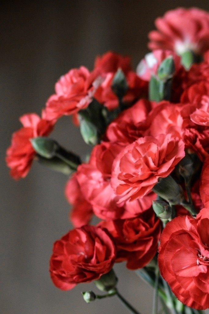 carnation-flowers-15152610684L4-1.jpg